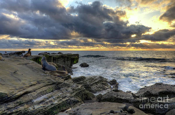 Photograph - Sea Lions At Sunset by Eddie Yerkish
