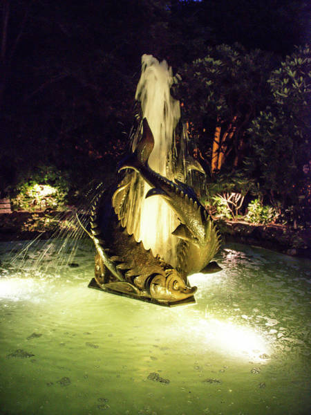 Photograph - Sea Monster Fountain At Night by Michael Bessler