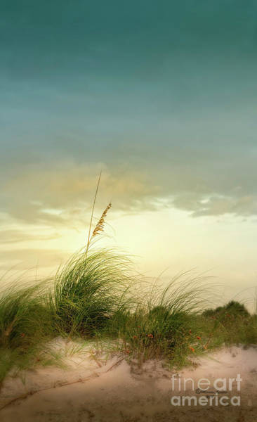 Wall Art - Photograph - Sea Oats And Florwers by Marvin Spates