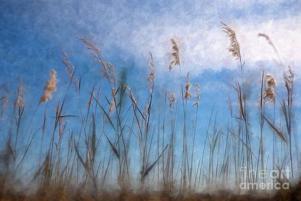 Outer Banks Painting - Sea Oats And Sky On Outer Banks Ap by Dan Carmichael