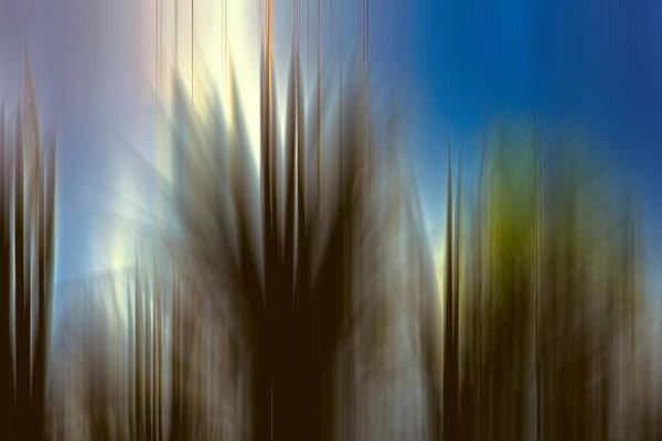 Photograph - Sea Oats by Evie Carrier