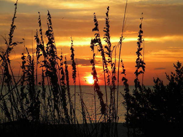 Sea Oats In The Sun Art Print