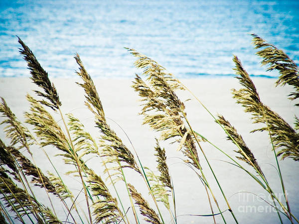 Sea Oats Art Print by Tonya Laker