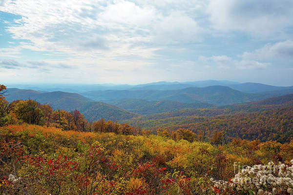 Shenandoah Wall Art - Photograph - Sea Of Color by Michael Ver Sprill