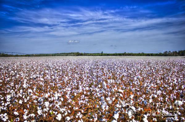 Photograph - A Sea Of Cotton South Georgia Cotton Field Landscape Art by Reid Callaway