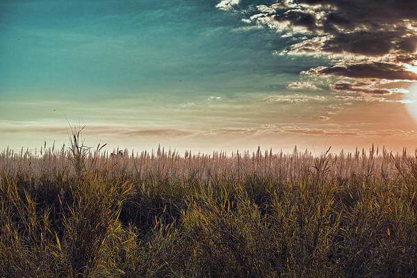 Photograph - Sea Of Golden Tassels by Roberto Aloi