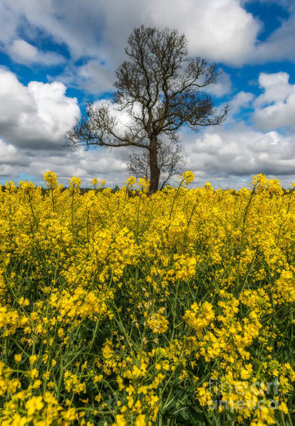 Photograph - Sea Of Yellow by Adrian Evans
