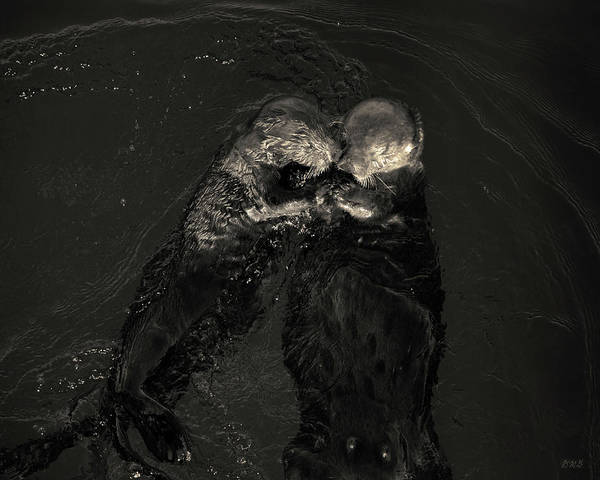 Photograph - Sea Otters II Toned by David Gordon