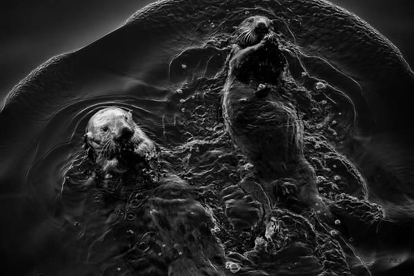 Photograph - Sea Otters Iv Bw by David Gordon