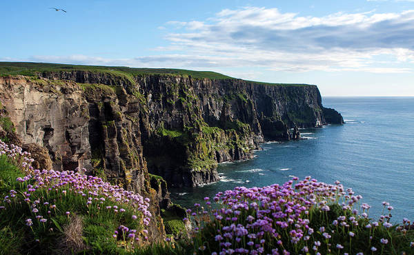 Photograph - Sea Pink On The Cliffs by Aidan Moran