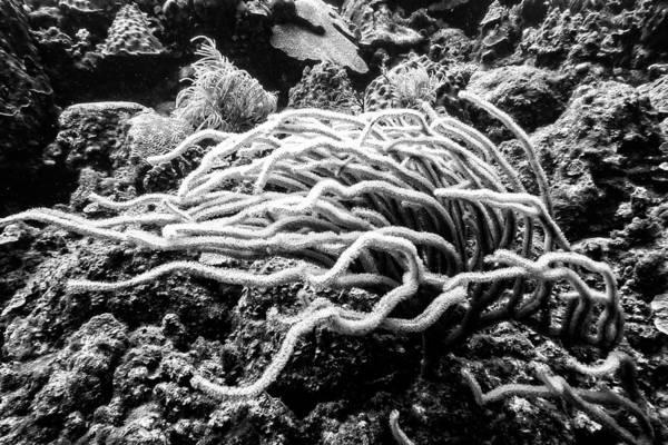 Photograph - Sea Rods In Movement by Perla Copernik