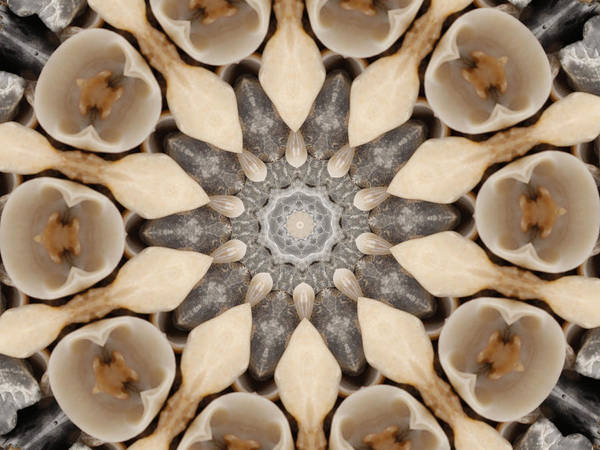Photograph - Sea Shell Abstract by Charles McKelroy