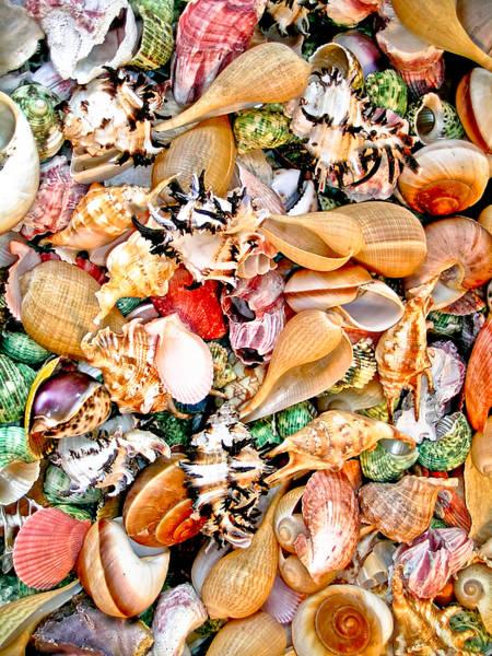 Photograph - Sea Shells by Jim DeLillo