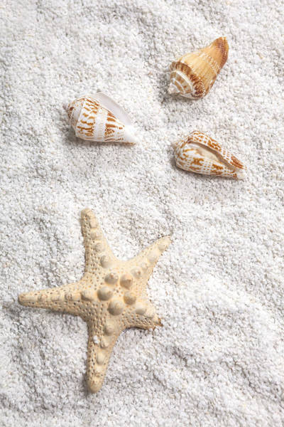 Starfish Photograph - Sea Shells by Joana Kruse
