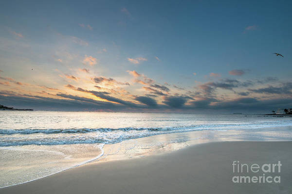 Photograph - Sea Shore Island Life by Dale Powell