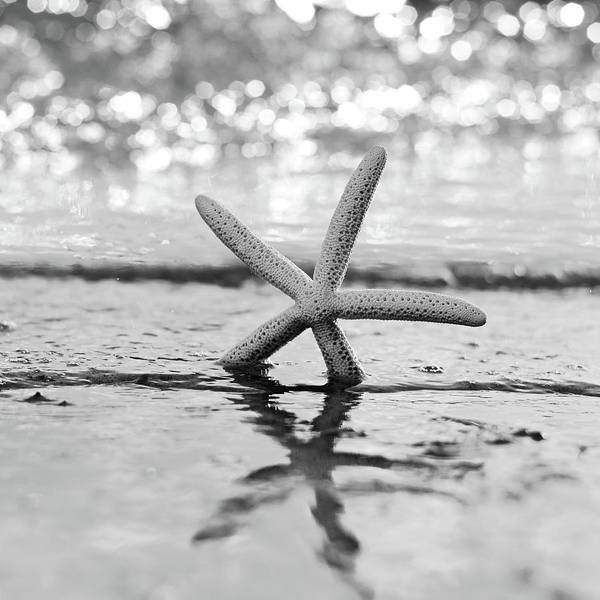 Uplift Photograph - Sea Star Bw by Laura Fasulo