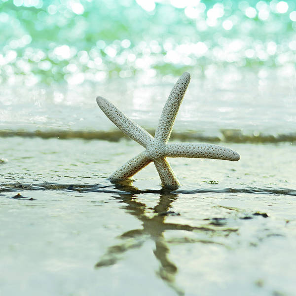 Seashell Photograph - Sea Star by Laura Fasulo