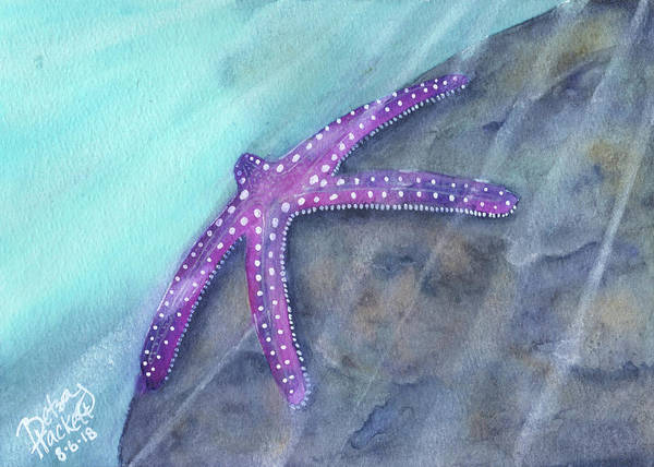 Painting - Sea Star Rays by Betsy Hackett