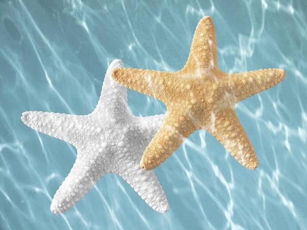 Photograph - Sea Stars Drifting In The Sunshine by Gill Billington