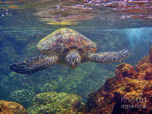 Photograph - Sea Turtle - Close Up by Bette Phelan