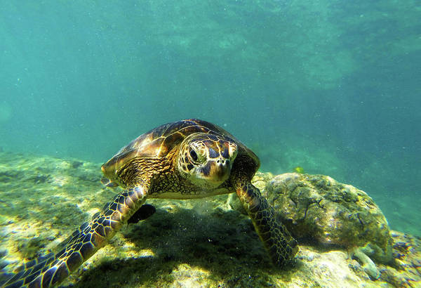 Photograph - Sea Turtle #3 by Anthony Jones