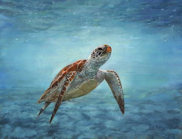 Sealife Painting - Sea Turtle by David Stribbling