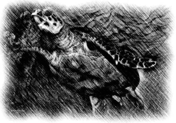 Digital Art - sea Turtle Drawing by Artful Oasis