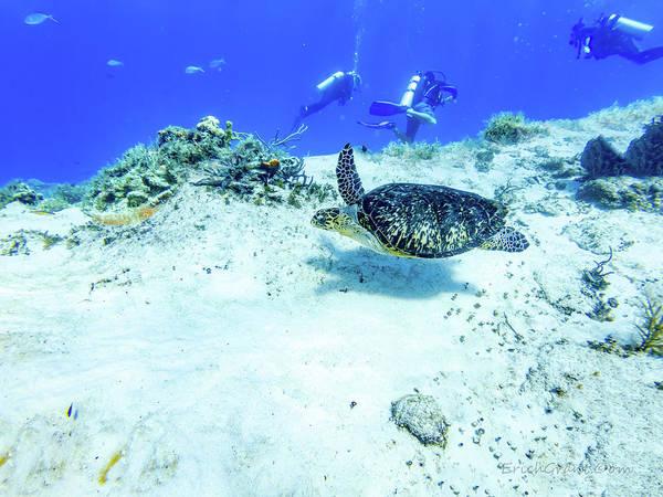 Photograph - Sea Turtle Swim by Erich Grant