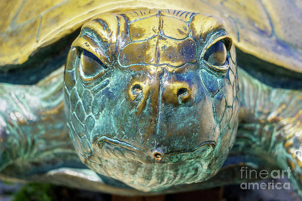 Photograph - Sea Turtle Statue Gulf Shores Al 1590a by Ricardos Creations