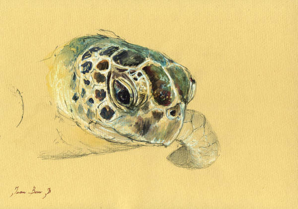 Turtle Painting - Sea Turtle Watercolor by Juan  Bosco
