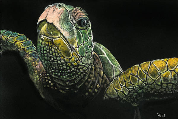 Drawing - Sea Turtle by William Underwood