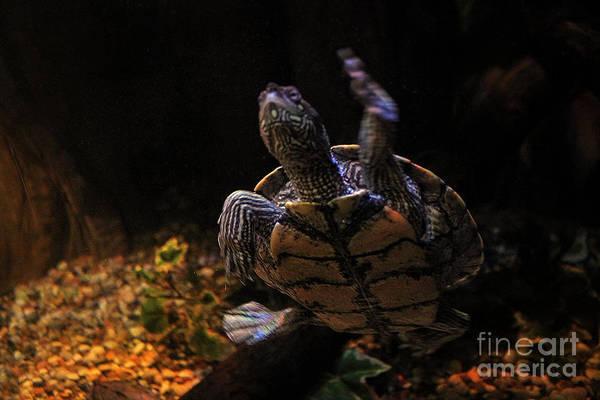 Photograph - Sea Turtles by Doc Braham