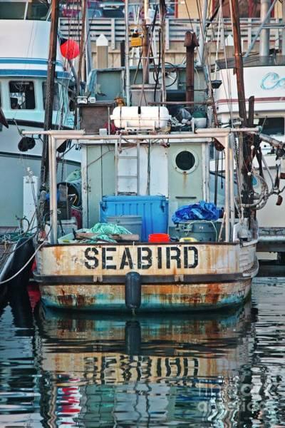 Photograph - Seabird by Teresa Wilson