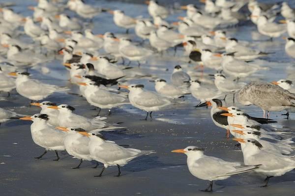 Photograph - Seabirds On The Beach by Bradford Martin