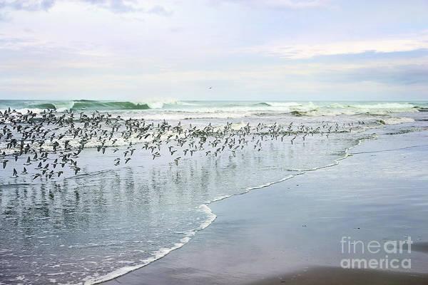 Wall Art - Photograph - Seabirds by Sylvia Cook