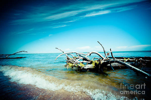 Photograph - Seacost With Old Tree In Water Kolka by Raimond Klavins