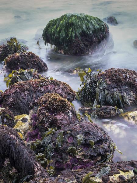 Photograph - Seafood Salad by Robert Potts