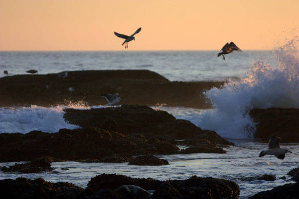 Photograph - Seagul Rocks by Brad Scott