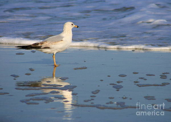 Photograph - Seagull And Reflection In The Tide by Angela Rath