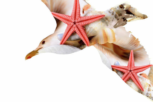 Photograph - Seagull And Shells by Peggy Collins