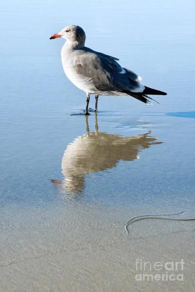 Wall Art - Photograph - Seagull At La Jolla Shores Beach California by Julia Hiebaum