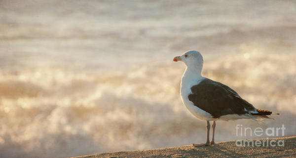 Photograph - Seagull At Sunrise by Michael James