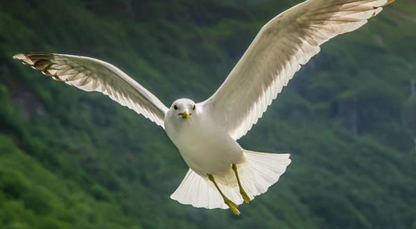 Seagull At The Fjord Art Print