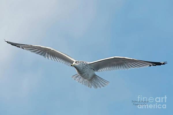 Photograph - Seagull Blue Sky by Deborah Benoit