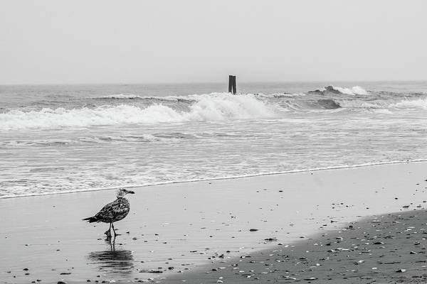 Photograph - Seagull By The Seashore by SR Green