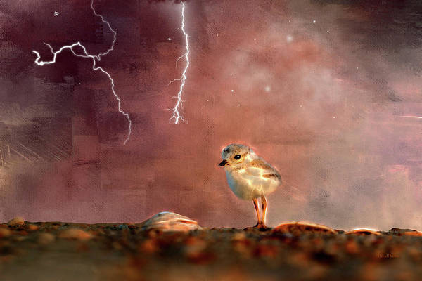 Photograph - Seagull Chick In Lightning Storm by Ericamaxine Price