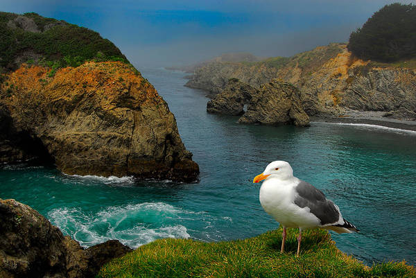 Photograph - Seagull Coast by Harry Spitz