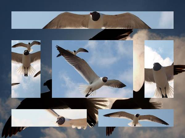 Photograph - Seagull Collage I by James Granberry