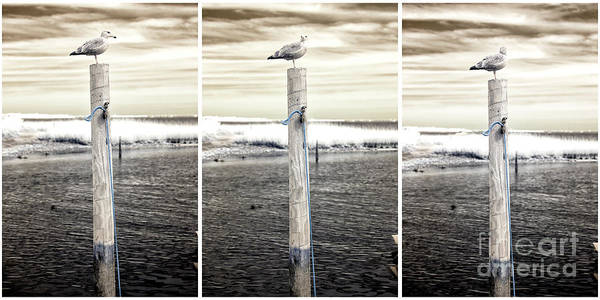 Photograph - Seagull Collage Infrared by John Rizzuto