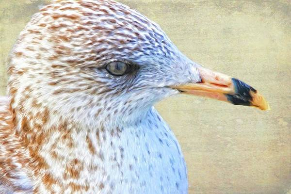 Photograph - Seagull Freckles by Alice Gipson